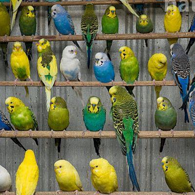 Super Successful Wholesales Birds Supplies Business for Sale