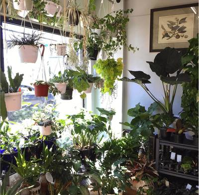 PLANT & FLOWER SHOP in East York! Turn-Key Business for Sale