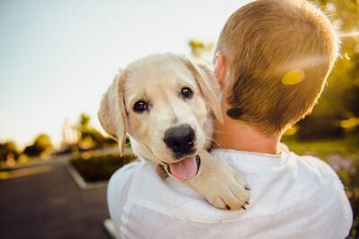 Well Established Dog Daycare/Boarding/Grooming Business Newmarket For Sale